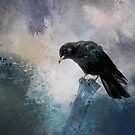 A beautiful painted black crow by Gatterwe