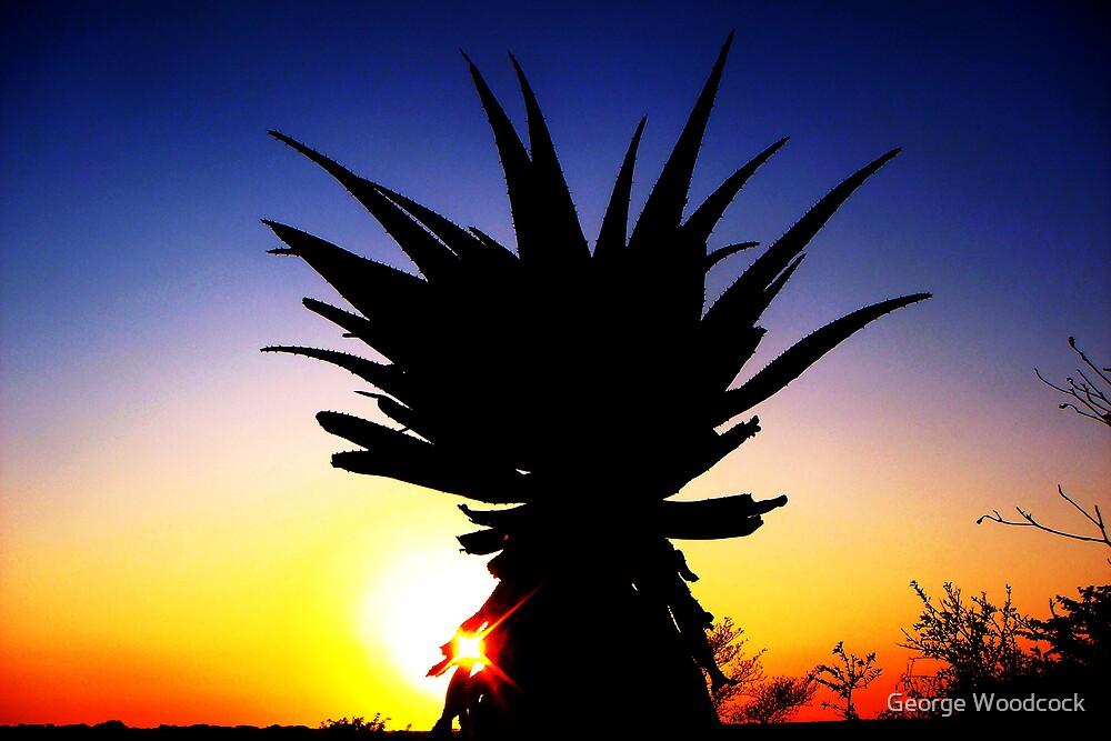 Aloe vera in the sunrise by George Woodcock