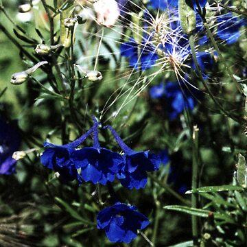 Blue flower by kjhart8