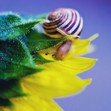 Snail by NaturesPixel