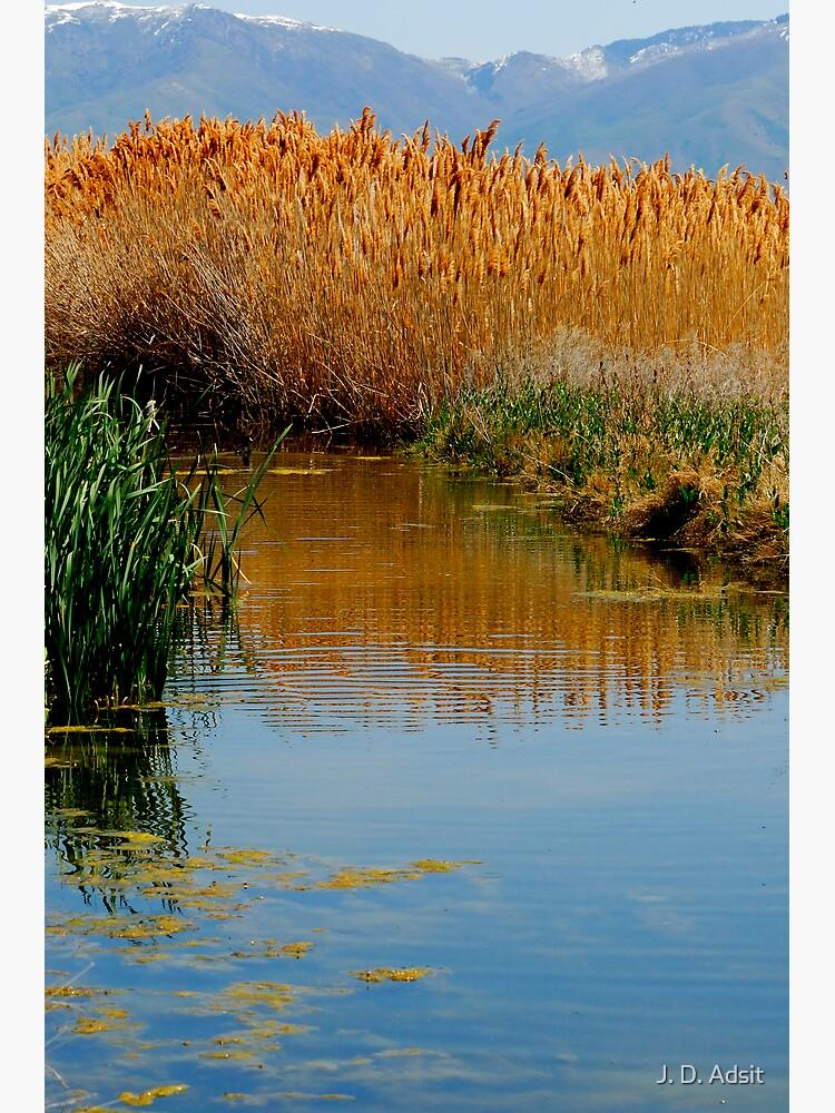 The Wetlands run through Me by adsitprojectpro