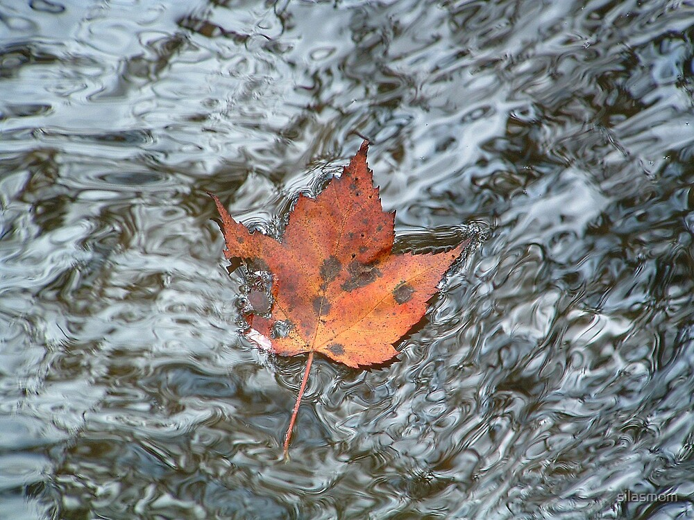 Leaf in Reflecting Water by silasmom