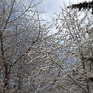 snowy  oregon forest 2 by Dawna Morton