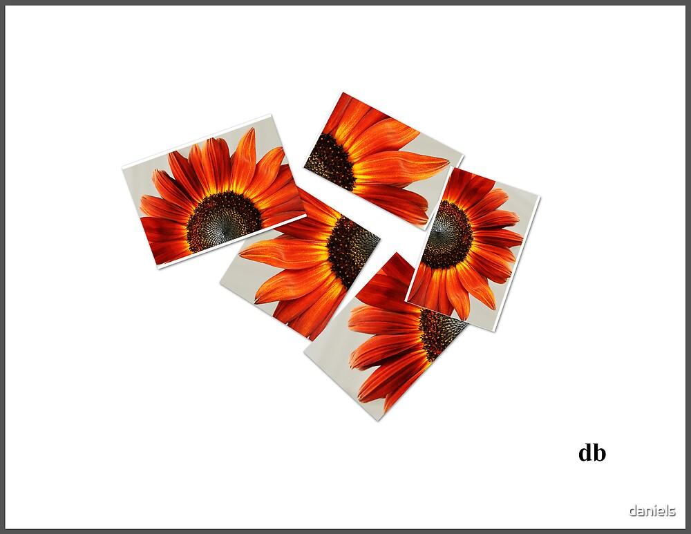 broken flower by daniels