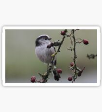 Long-Tailed Tit. Sticker