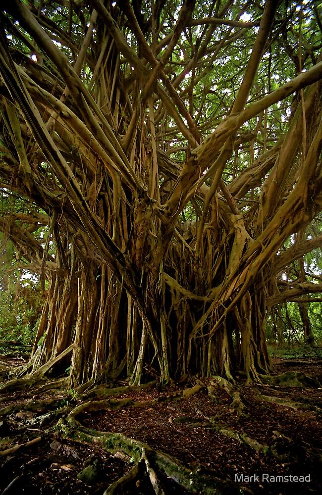 Banyan Tree by Mark Ramstead