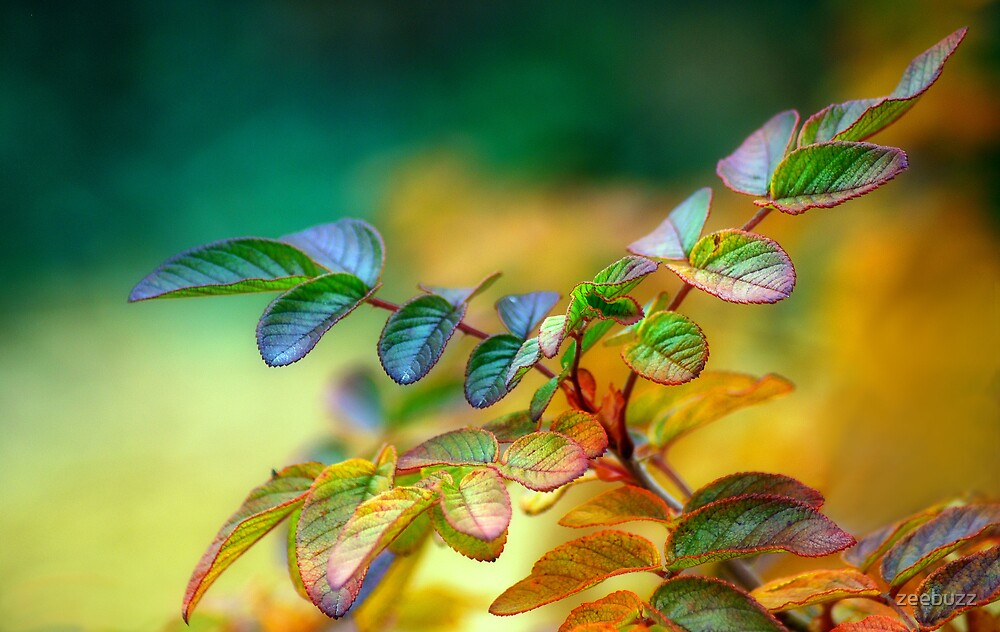November Rose Leaves by zeebuzz