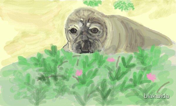 baby elephant seal by blakwida