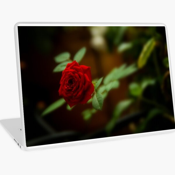 small red rose Laptop Skin