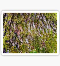 Moss Covered Sticker