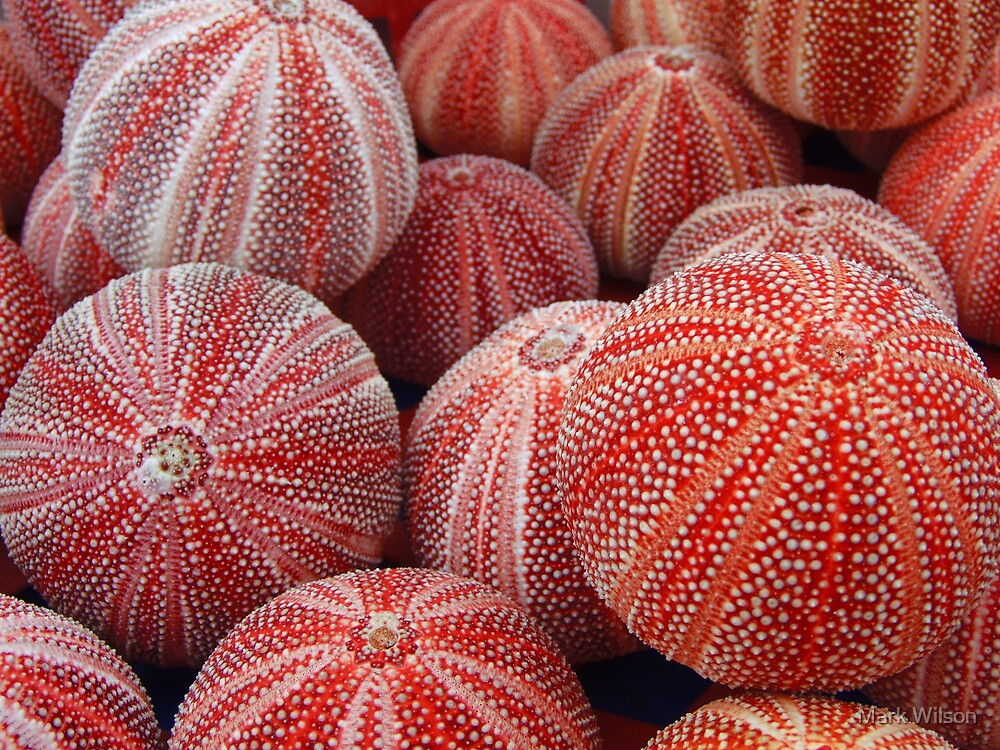 Sea Urchins by Mark Wilson
