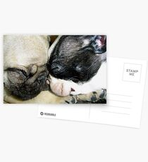 Pooped Puppies Postcards