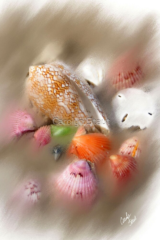 Shell Wash by Carolyn Staut