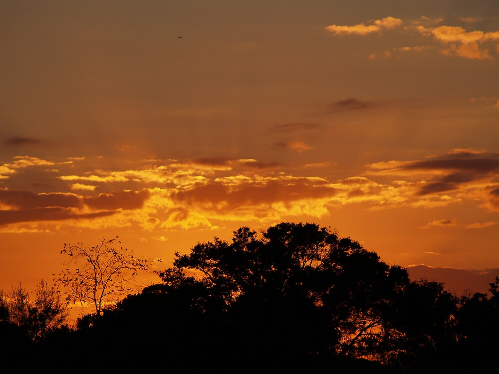 Golden sunset by dewinged