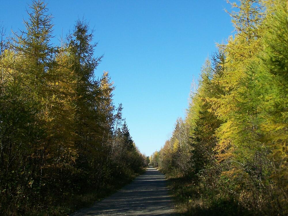 Fall Trail by Gene Cyr