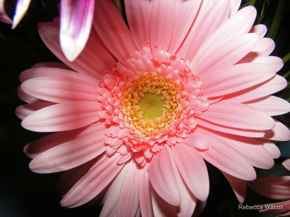 Pretty In Pink by Rebecca Brann