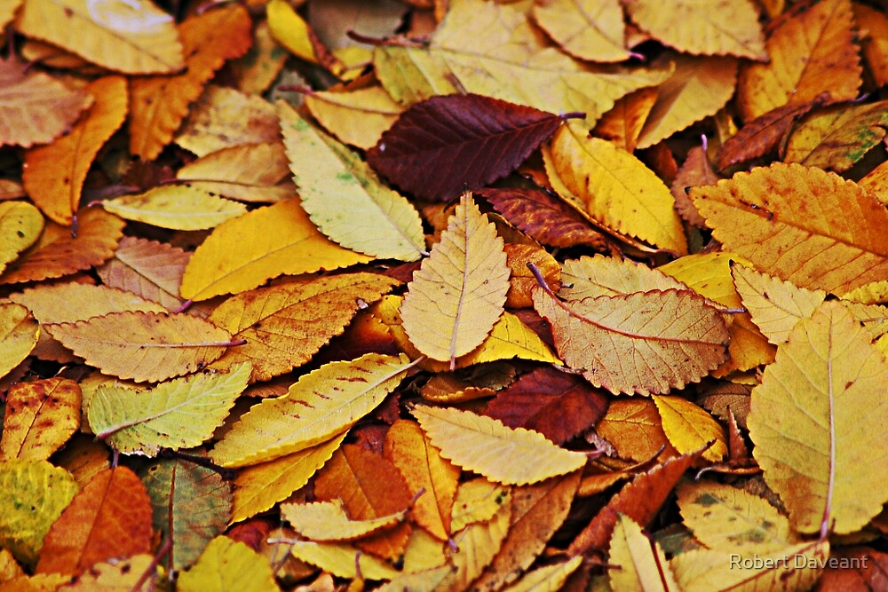 Autumn Colors by Robert Daveant