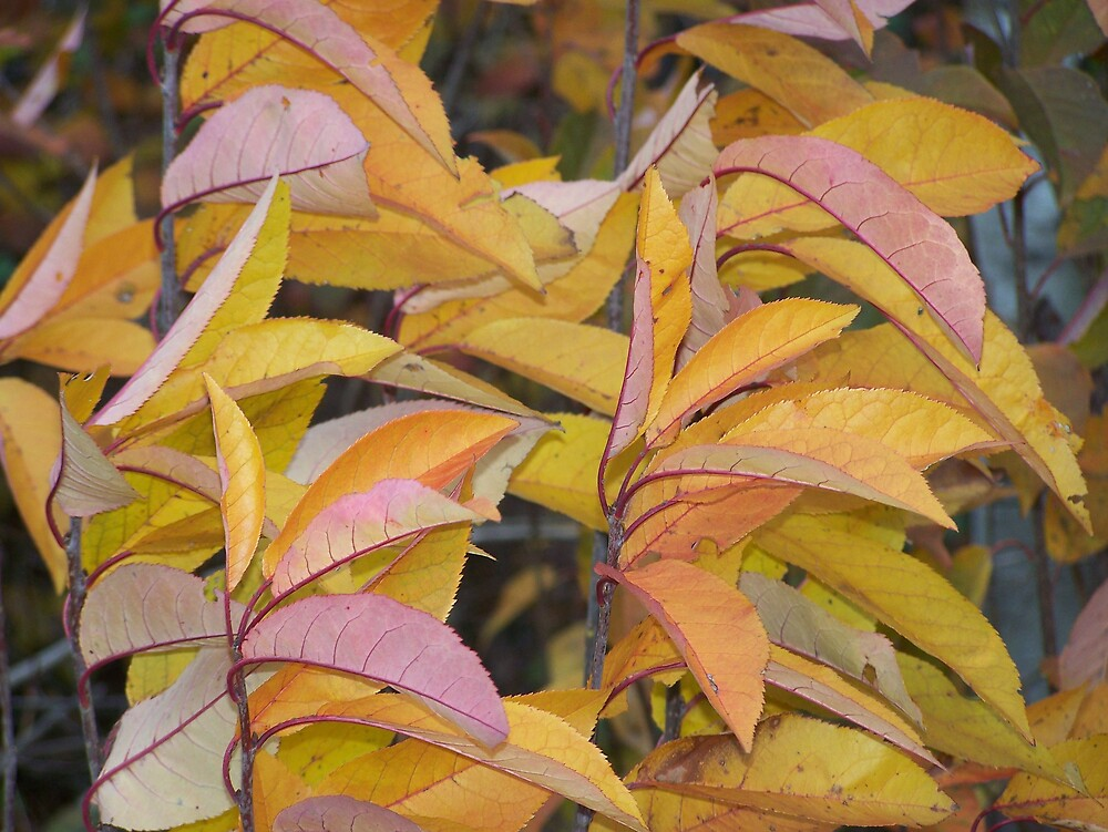 Changed Leaves by Gene Cyr