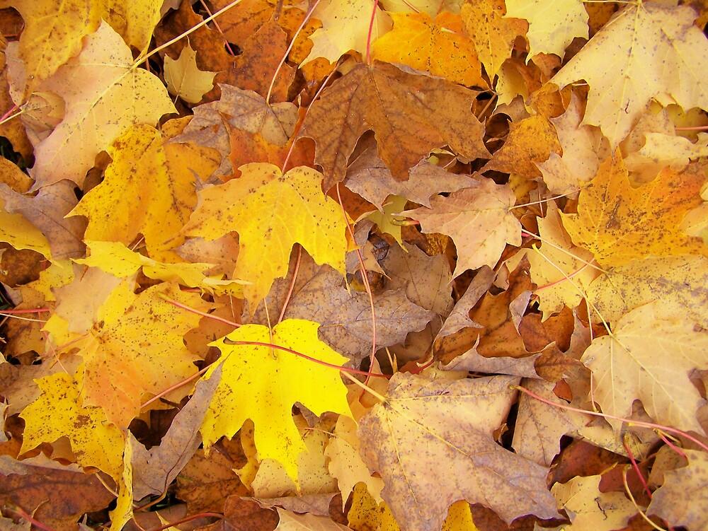 Yellow Autumn by Gene Cyr