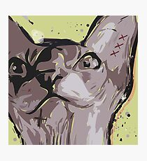Cartoon style. Illustration poster with the evil cat. Photographic Print
