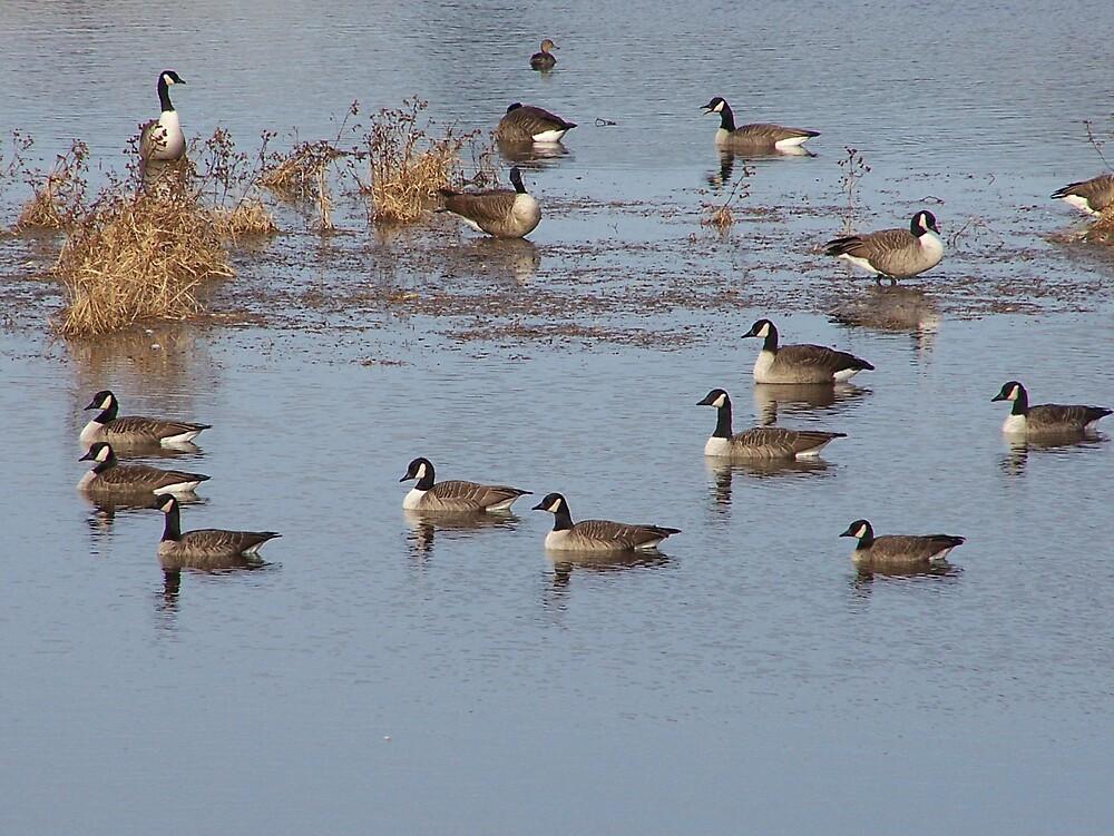 Geese On Pond by Gene Cyr