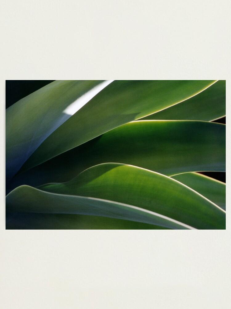 Alternate view of Succulent Photographic Print
