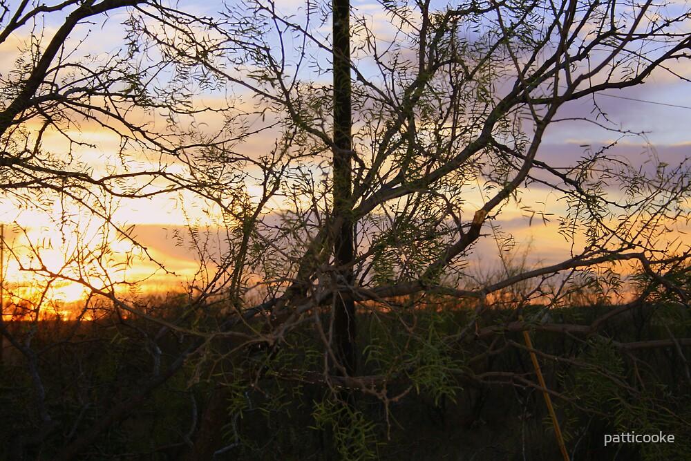 Sunset by patticooke