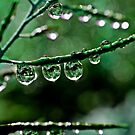 Rain drops by dedakota