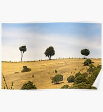 Trees on the hill Poster
