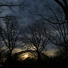 Aviary Sunrise - Queens Zoo   Flushing, New York by © Sophie W. Smith