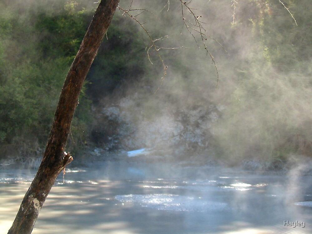 Rotorua Mists by Hayley