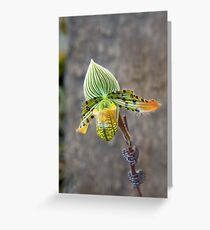 Aladdin's Lady Slipper Greeting Card