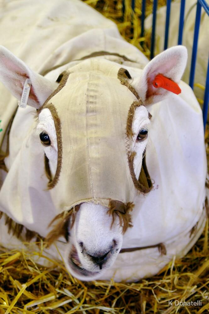 Sheep by K Donatelli