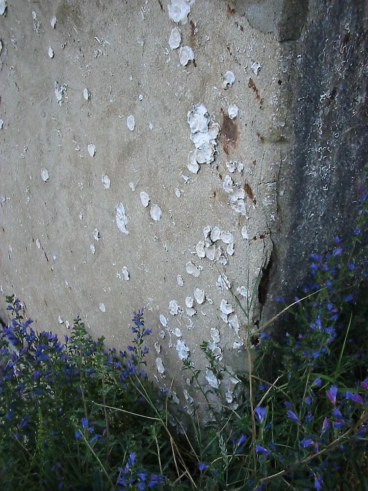 White Lichen by marchk