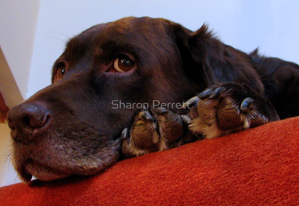 Bear is still watching me................................... by Sharon Perrett