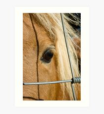 Lonely Poney Art Print