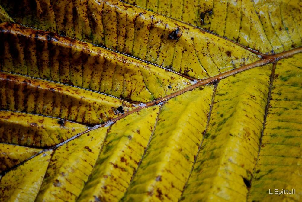 Fallen leaf by L Spittall