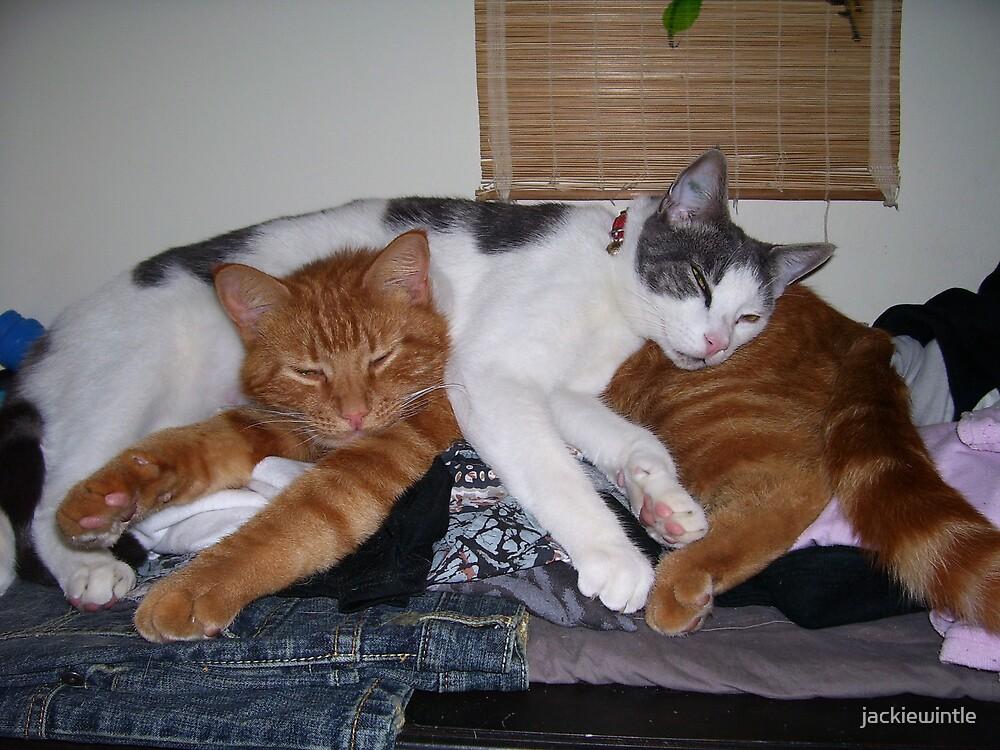 kitty love by jackiewintle