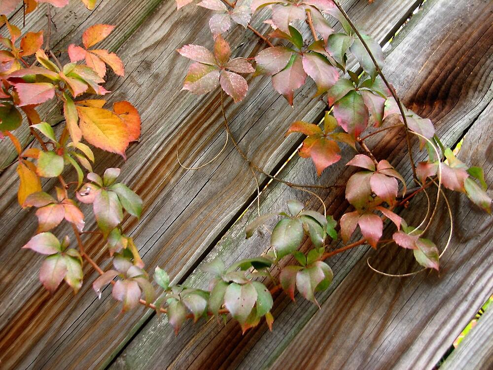 Leaf Wreath by JanG