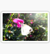 Pearl White Butterfly on pink flower Sticker