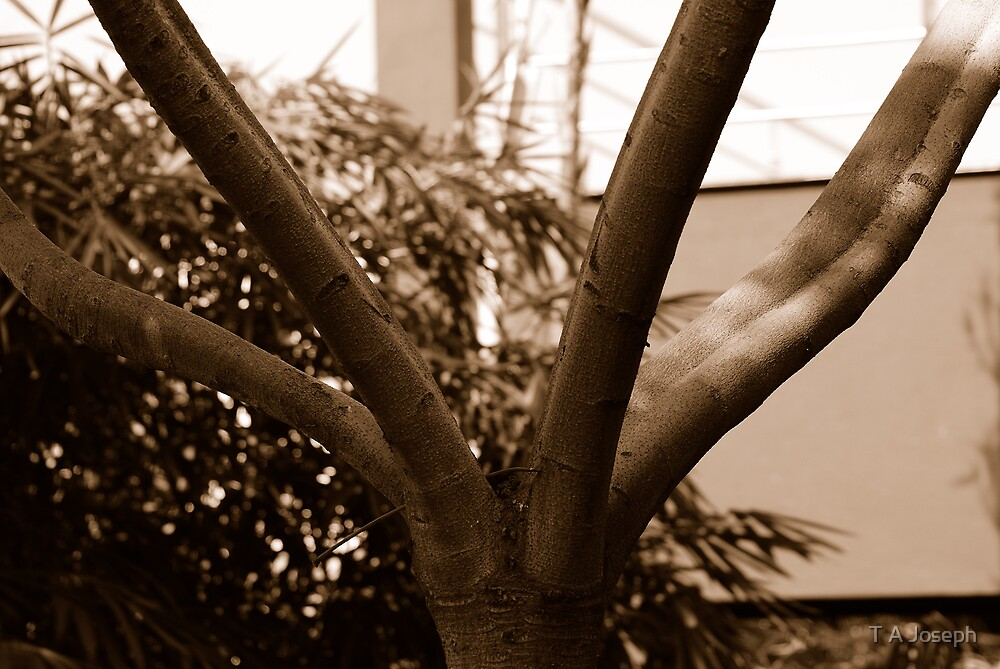 Branching Out by T A Joseph