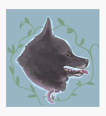 Schipperke Dog Photographic Print
