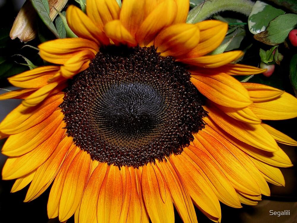Sunflower by Segalili