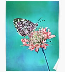 Butterfly on flower  Poster