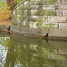 Bridge Over Lagoon Waters by viqi