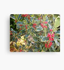Varigated holly Canvas Print