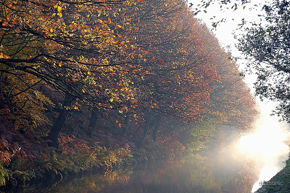 Leaves and Mist by daimonic