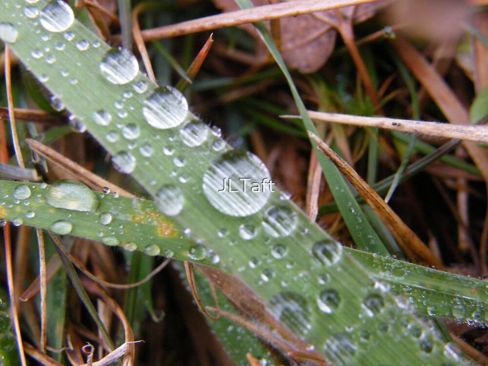Wet Grass by JLTaft