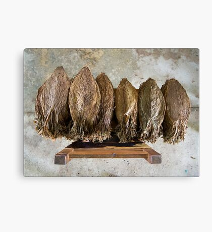 Tobacco Leaves on Chair Canvas Print