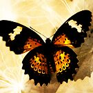 Butterflies Above Our Nation by Tanya B. Schroeder